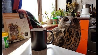 Tea with an owl, herbs and bees. The cats are looking for spring, the owl brews tea from the owls