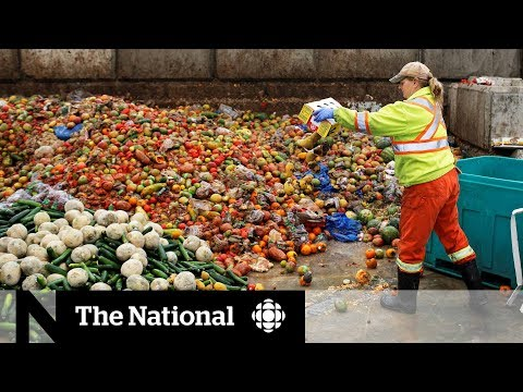 Canadians Get Creative In Solving Food Waste Problem