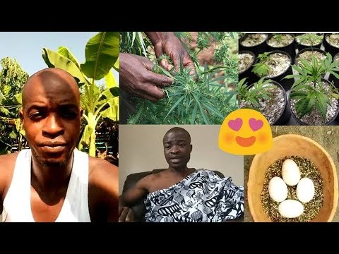 WOWW!! GHANA YOU-TH LEARNING TO GROW MA-R!JUANA HERBS IN THEIR HOMS. EZEKIEL 47:12🌴🌴