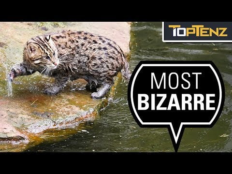 10 Living Things That Shouldn't Exist But Do