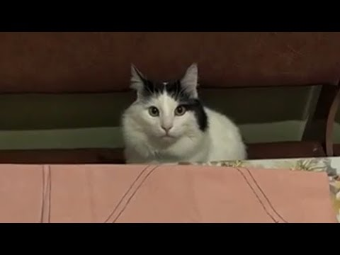 cute-cat-waiting-for-something