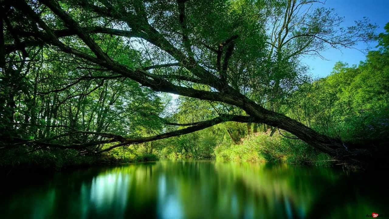 Фото красивая вика на природе фото 12-497
