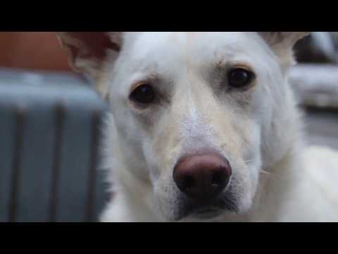 Trickdog Blanca - Kanaltrailer (Story of a dreamer)