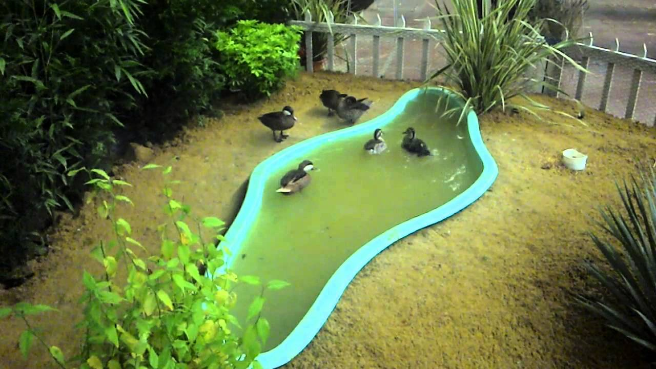 filtre bassin a canard