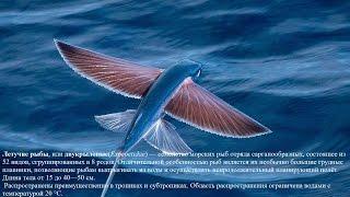 Летучие рыбы Flying fish