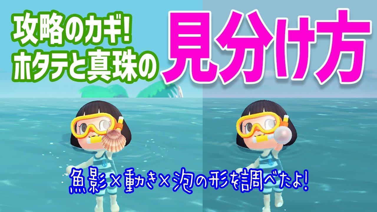 【あつ森】しんじゅ(真珠)とホタテの見分け方を調べたよ!海の幸・攻略のコツ【あつまれどうぶつの森】