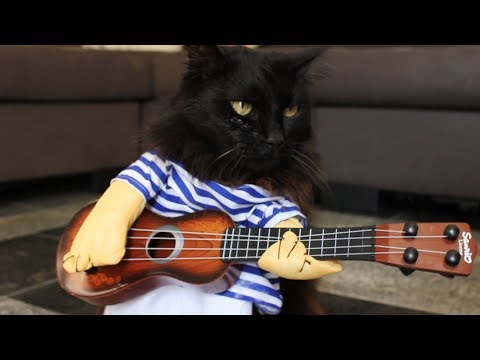 Cats Play Sweet Child O' Mine - Cats Version - Singing Cats