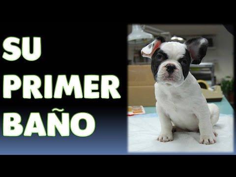 Cuando se puede ba ar a un cachorro momento ideal para su primer ba o youtube - Cuando se puede banar a un cachorro ...