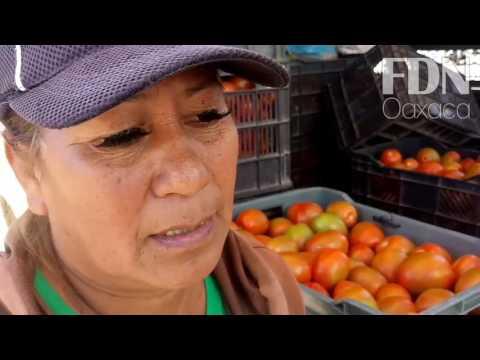 ¿Por qué cayó el precio del tomate en Oaxaca?