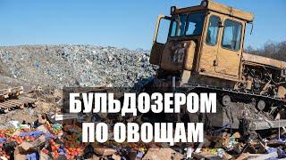 В Калининградской области уничтожили 30 тонн овощей и фруктов