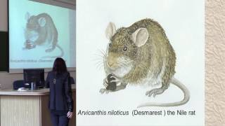 Video Fleas, rats and other stories - The palaeoecology of the Black Death download MP3, 3GP, MP4, WEBM, AVI, FLV Mei 2018