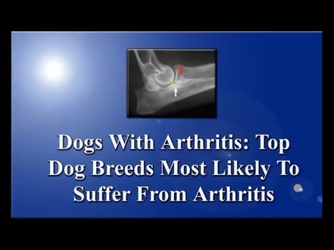Dogs Breeds: Top ten most likely to get arthritis