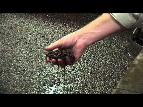 How to make Port wine: Fermentation & Fortification