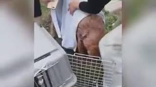 Дворовую собаку порезали живодёры в Новоалтайске