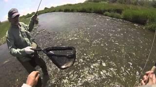 Ham Fork Fishing