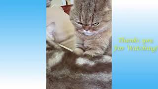 Cute Pets And Funny Animals Compilation  Pets Garden