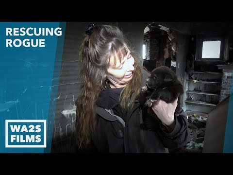 Hope For Abandoned Puppies Rescued from Burned House: Ep 25 Rescuing Rogue with Detroit Pit Crew