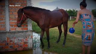 Wow !! Fantastic How to Wash and Care for Your Horse's, My Sister Learn How To Bath A Horse