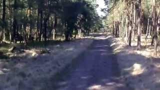 Bosrit over Veluwezoom vanuit Camping Boszicht in Laag-Soeren
