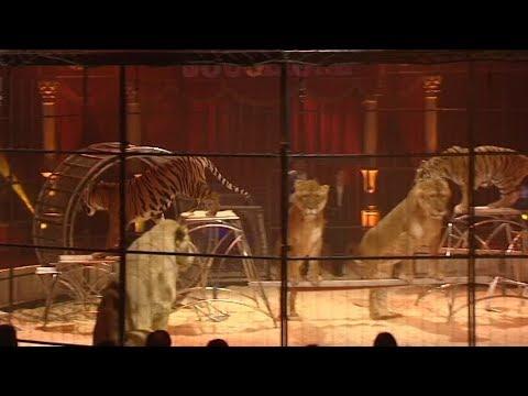 Nevers interdit les cirques avec animaux sauvages
