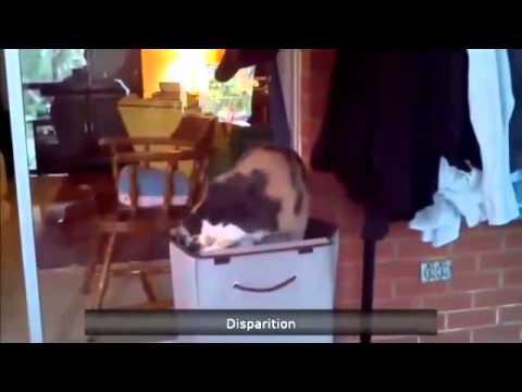 Видео Подборка Приколов с Животными 13 Кошки Собаки Смешные Животные 2015