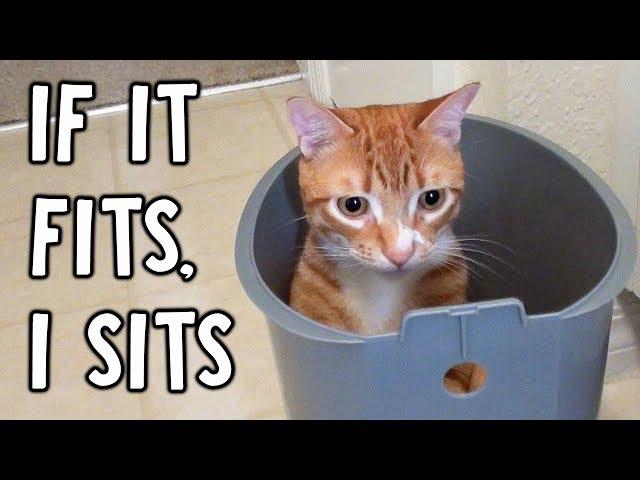 If It Fits, I Sits...