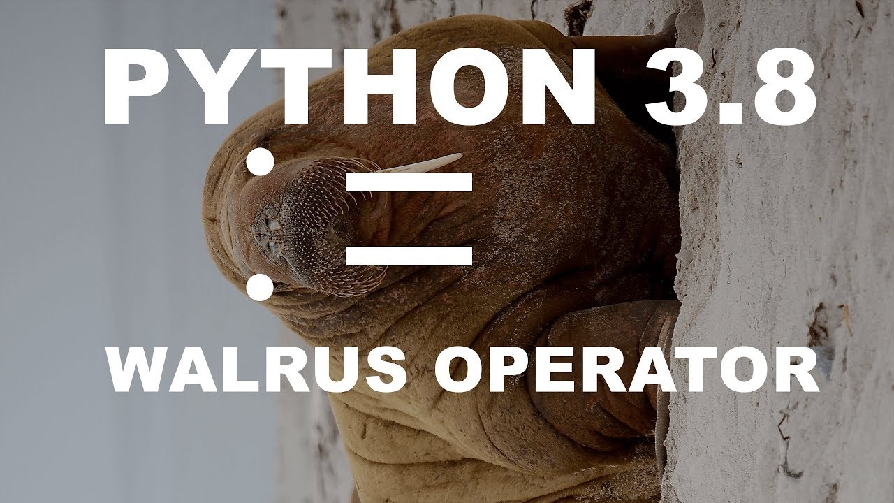 Image result for walrus operator