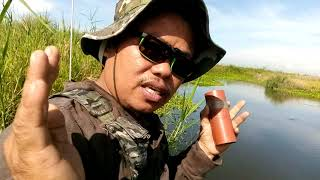 Tiksay fish hunting ( THAI FISH ANG MALUTANG )