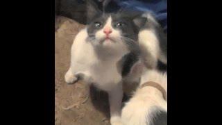 кашаки подвальные (2 кошки и 2 котёнка)