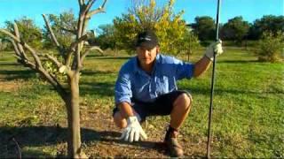 DIY Gardening Tips - Citrus Gardening by Flicks - Video Production Company Sydney