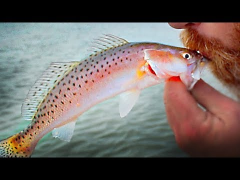 Fall Trout Fishing at Murrells Inlet