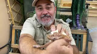 2 Snake Heads 1 Egg!