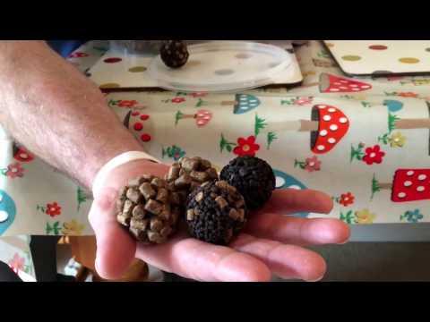 Feed Pellet Balls at Range Baits Feed Pellets Halibut pellets plus a hemp pellet ball..