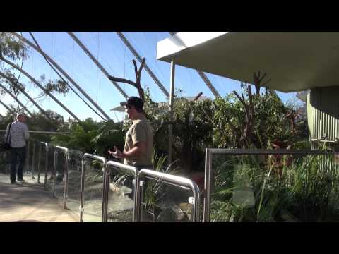 Kids View: WILD LIFE Sydney Zoo (Insider tips from local kids)