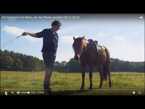 Uwe Weinzierl React: Zeigt die NDR-Nordstory Tierquälerei oder ist es realistisches Pferdetraining?
