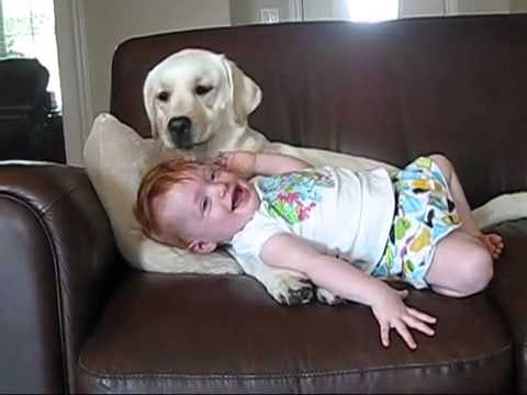 why do dogs lick babies jpg 853x1280
