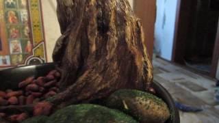 ствол для бисерного дерева легко и быстро и красиво