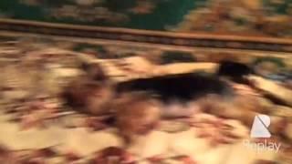 Фильм: моя собака 2
