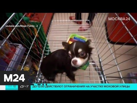 Как москвичи реагируют на домашних питомцев в продуктовых магазинах - Москва 24