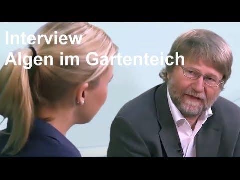 Berühmt Fadenalgen, Grünalgen und Schwebealgen im Gartenteich - Oase TV &LH_49