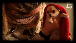 TTwice TV - 6 - Moustik, funny dog