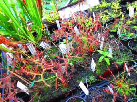 Carnivorous Plant Nursery 1
