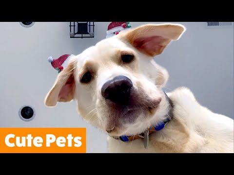 Cute Pet Reactions & Bloopers   Funny Pet Videos