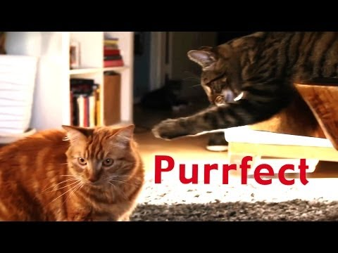 Purrfect: A Dating Site for Cats from YouTube · Duration:  1 minutes 10 seconds