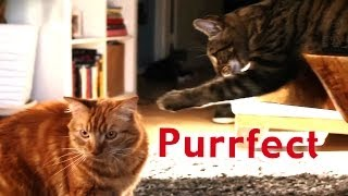 Purrfect: A Dating Site for Cats