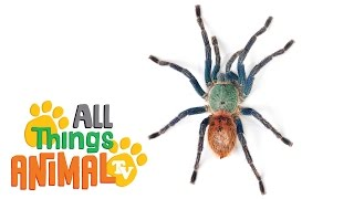 * SPIDER * | Animals For Kids | All Things Animal TV