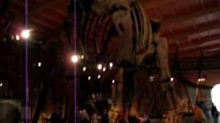 Argentinosaurus Walkby