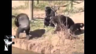 Khi động vật biết troll - Cười vỡ bụng