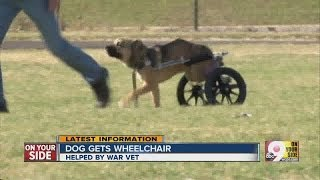 Indiana Man Inspired By Dog Without Its Two Back Legs Gets The Pooch A New Wheelchair