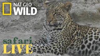 Safari Live - Day 13   Nat Geo WILD